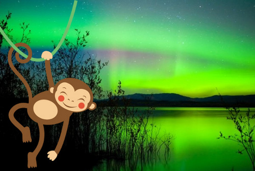 Alexa, Open Aurora Monkey. For Voice Aurora Borealis Real-Time Forecasts