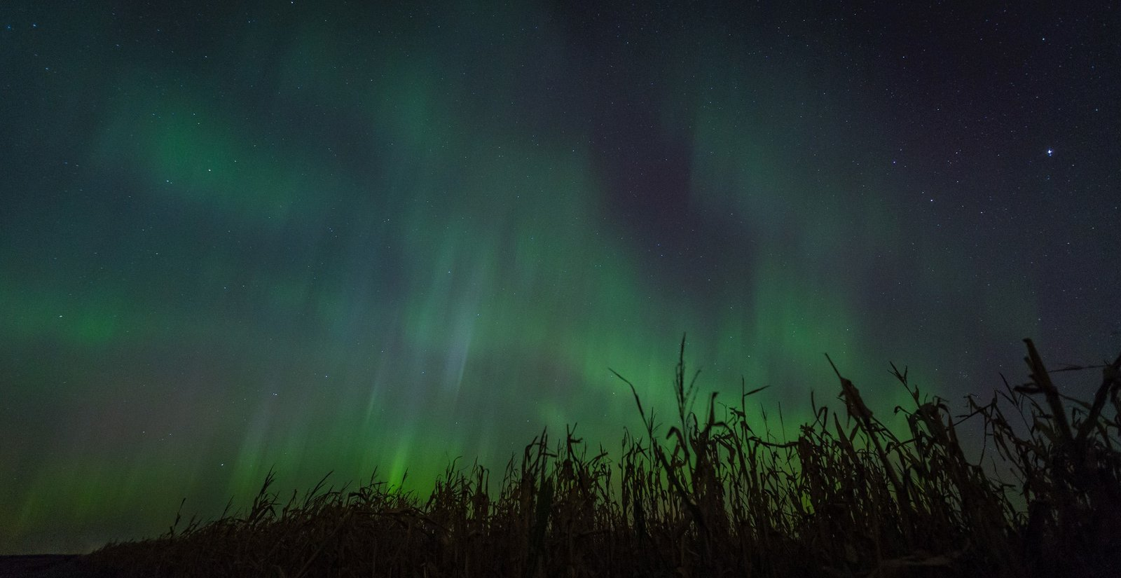 Aurora Borealis. In corn field in Minnesota by Nathan Lodermeier